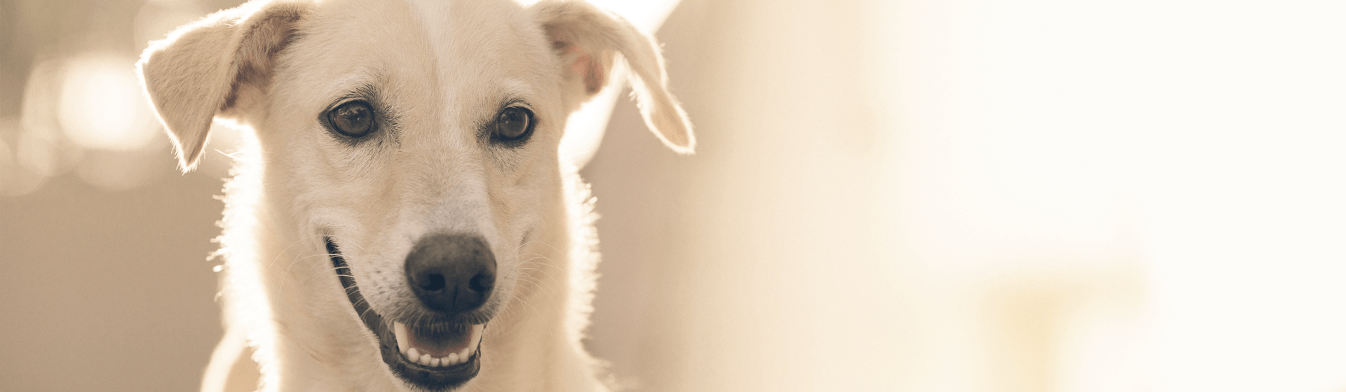 Mögliche Schadensansprüche nach einem Hundebiss.